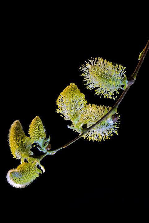 spring - fototopia