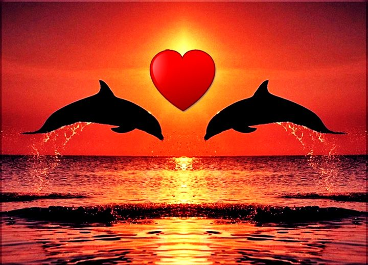Lovely Dolphins - White Angel