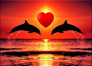 Lovely Dolphins
