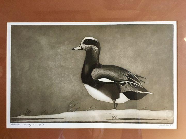 American Widgeon - Wilson Western art