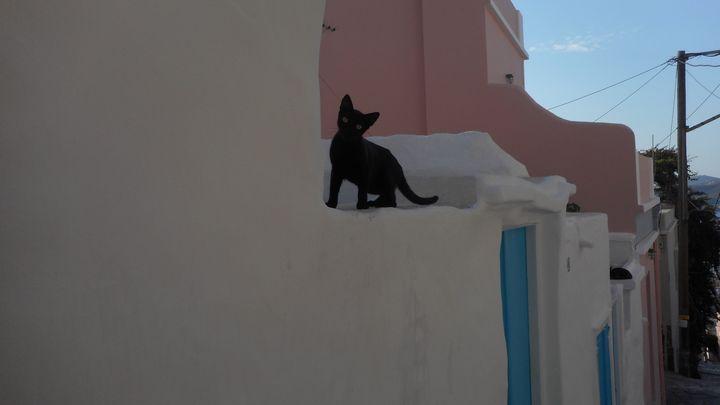 Grecian Kitty - Buttermilk Girl Photography