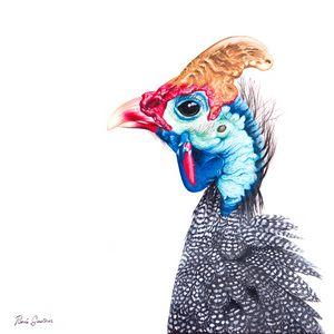 Helmited Guinea Fowl