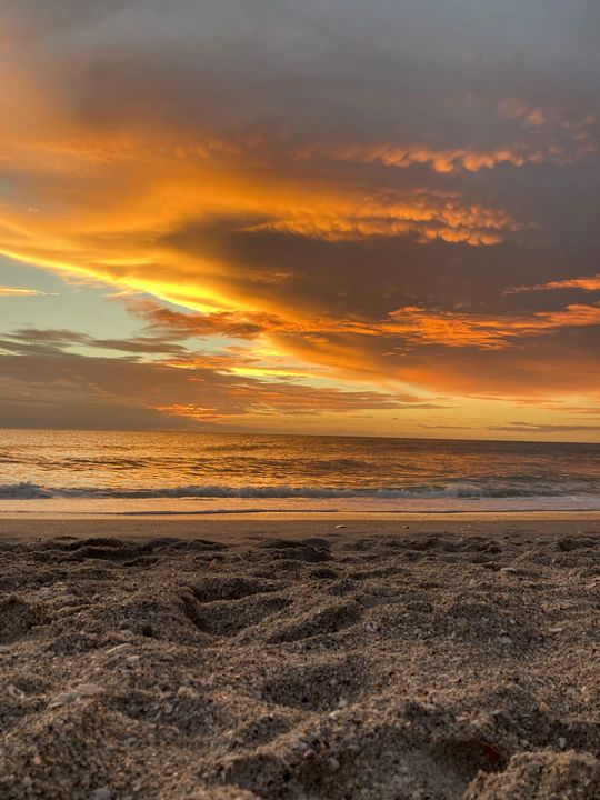 The Calm After The Storm - Fantail Images- Lora Ross