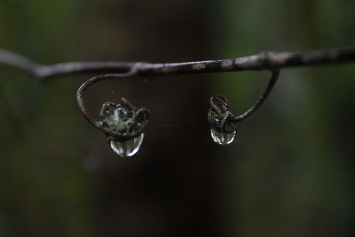 A drop in time - Fantail Images- Lora Ross