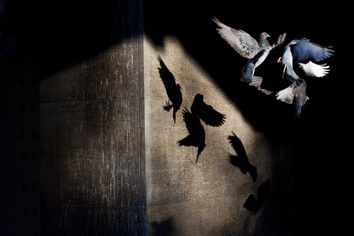Doves in Metro station - Jessy Libik Photography