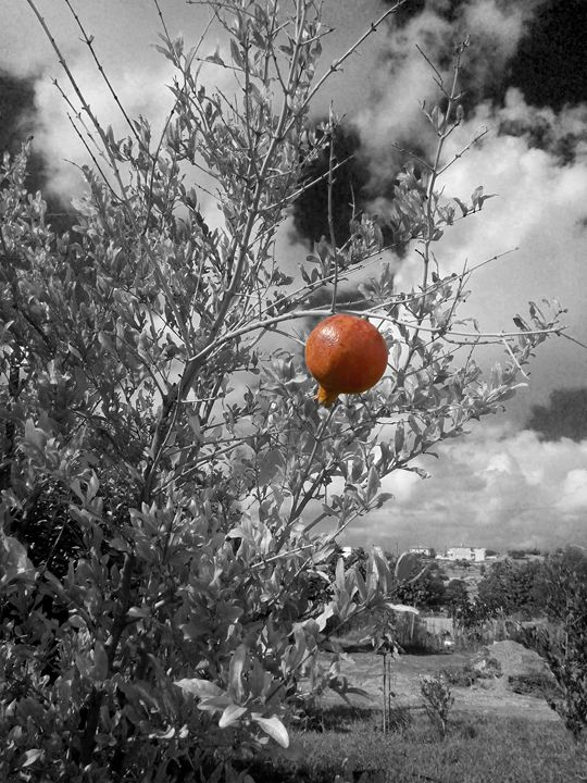 Pomegranate - Digital