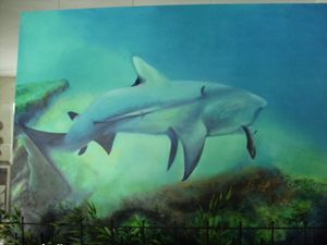 Mr Bull Shark