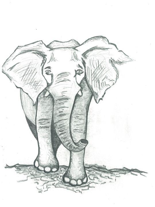 Elephant - Meyer Arts