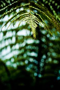 Over Hanging Fern