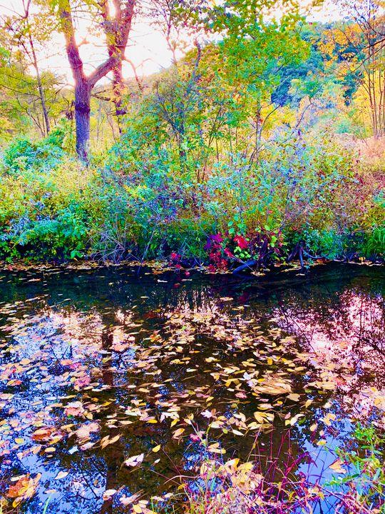 Sunset at the creek - NatAnat