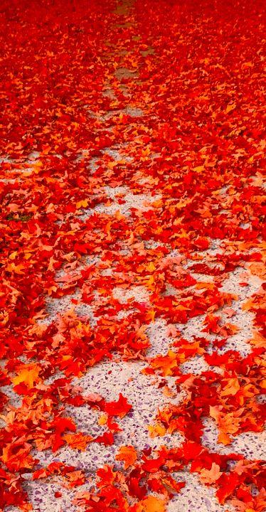 Red fallen leaves - NatAnat