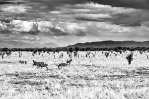 Southern Serengeti - 17/11/17