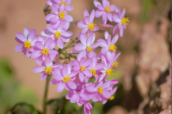 spring flowers - LynneE