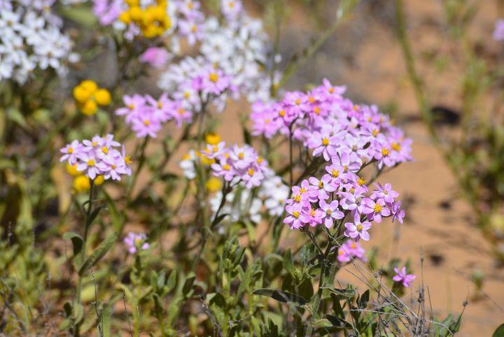 More Spring Flowers - LynneE
