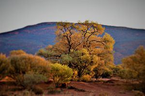 Outback Colour