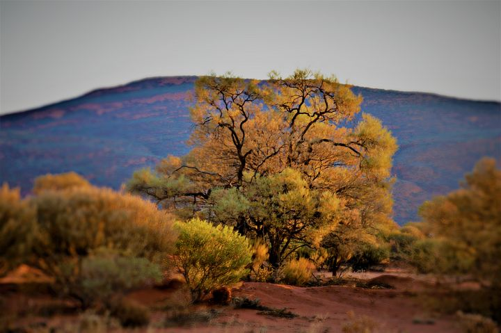 Outback Colour - LynneE