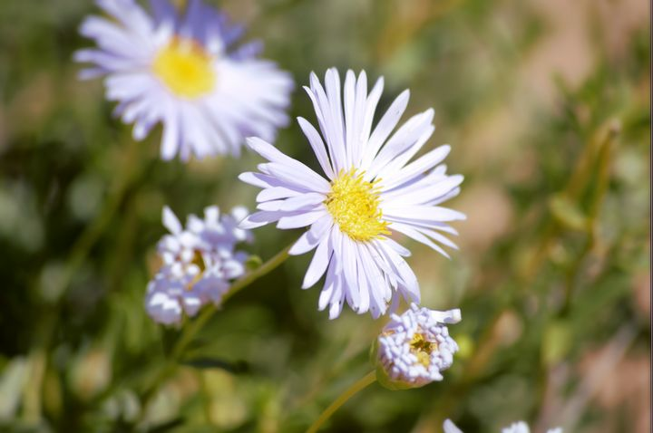 flowers of the bush - LynneE