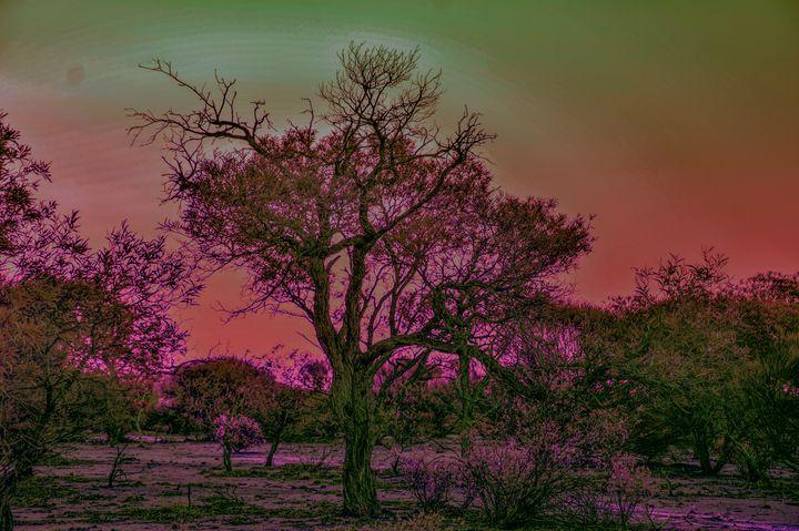 Sundown in the bush - LynneE