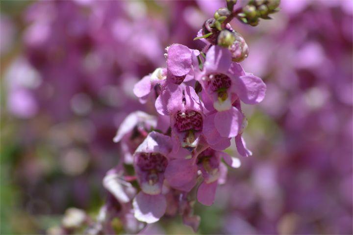 Summer Flower - LynneE
