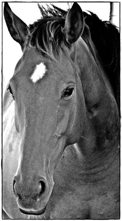 Horse Sense - LynneE