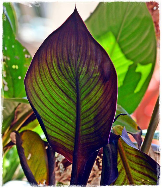 Leafy - LynneE