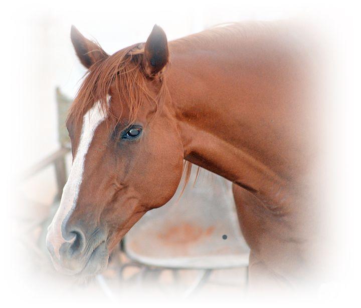 Horse - LynneE