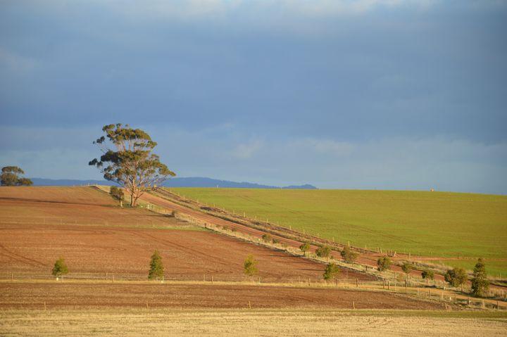 Country Road - LynneE