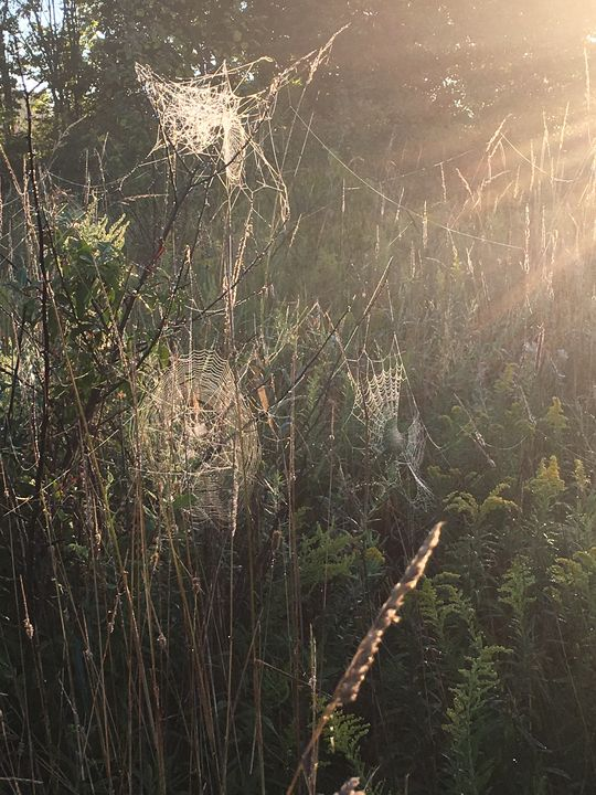 Spiderwebs in sun - Cinderslanding