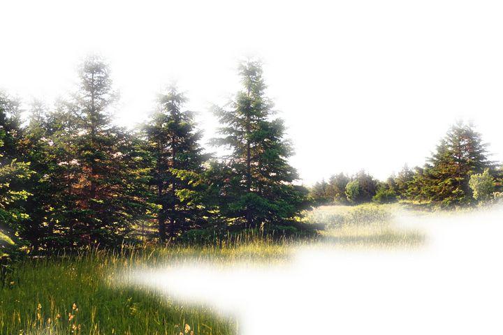 The Dream Meadow - David Toy - Peak Light Photography