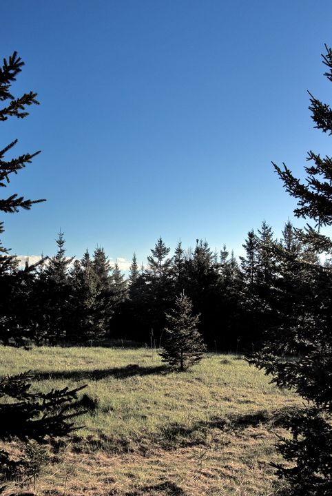 Lonely Pine - David Toy - Peak Light Photography
