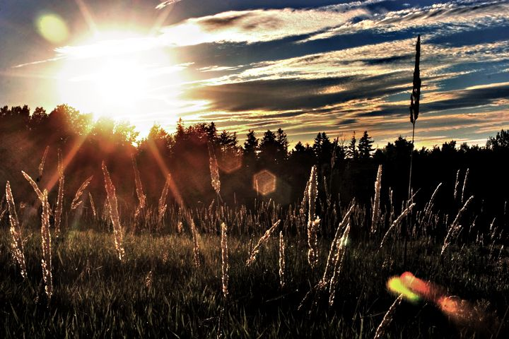 The Brilliant Sun - David Toy - Peak Light Photography