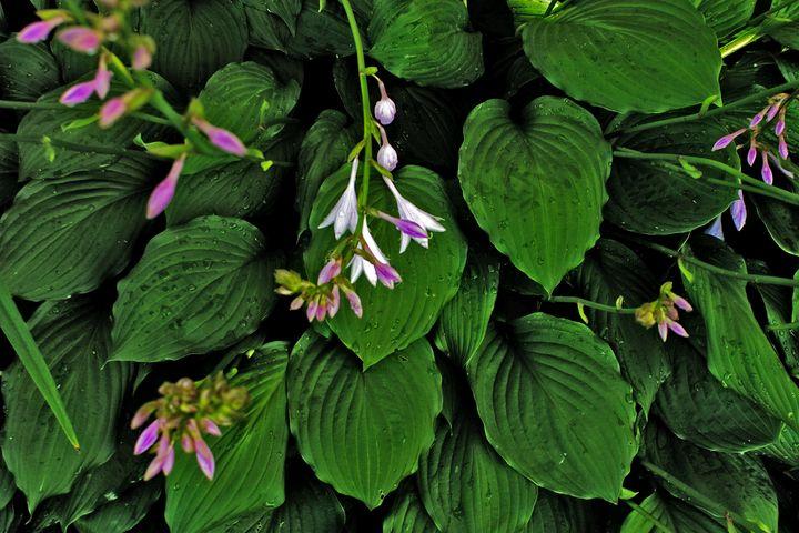 Greens and Purples - David Toy - Peak Light Photography