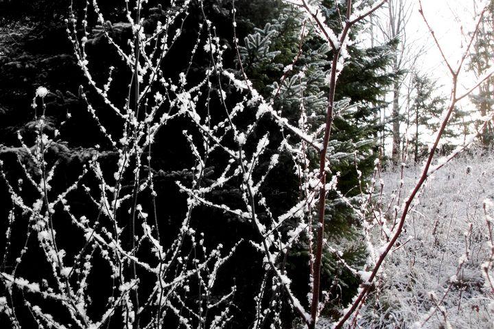 Ice Crystals - David Toy - Peak Light Photography