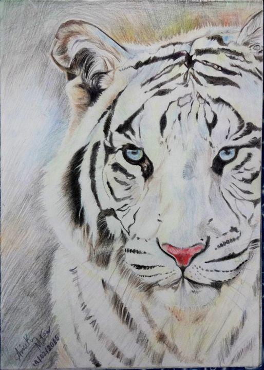 White Bengal Tiger - AM_Rtz
