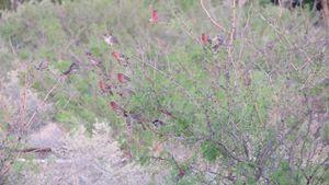 Cluttered birds