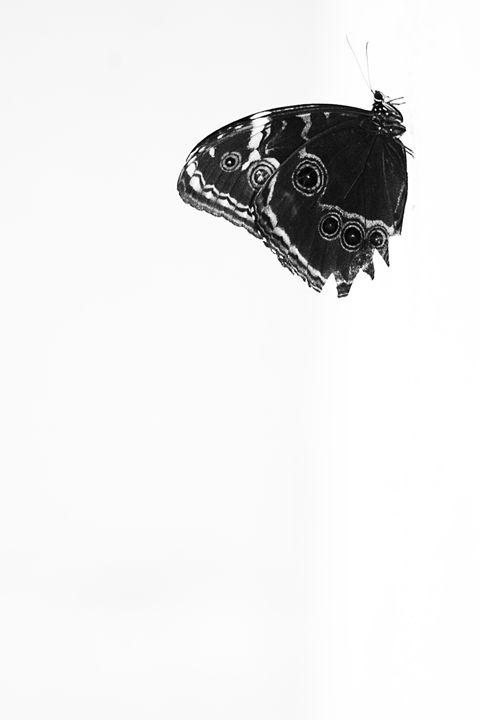 Still Life Butterfly - ArtByLaurenBritz