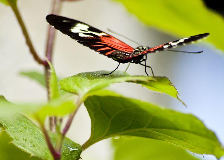Butterfly Taking Off - ArtByLaurenBritz
