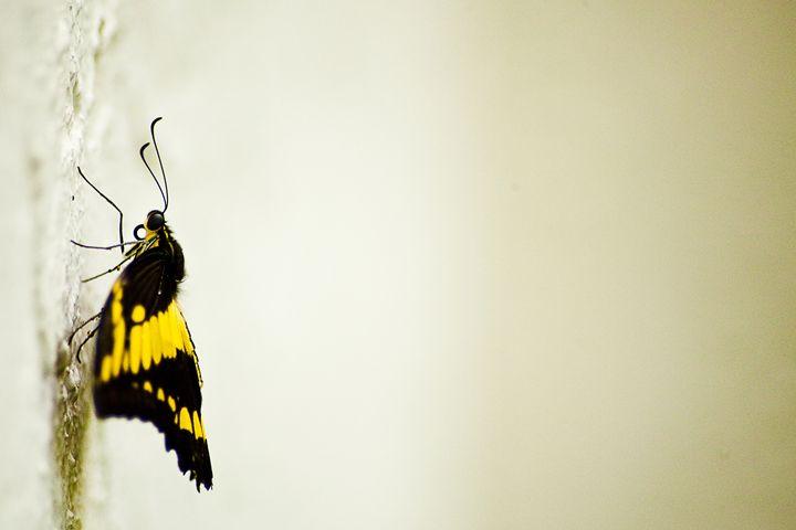 Butterfly on a Wall - ArtByLaurenBritz
