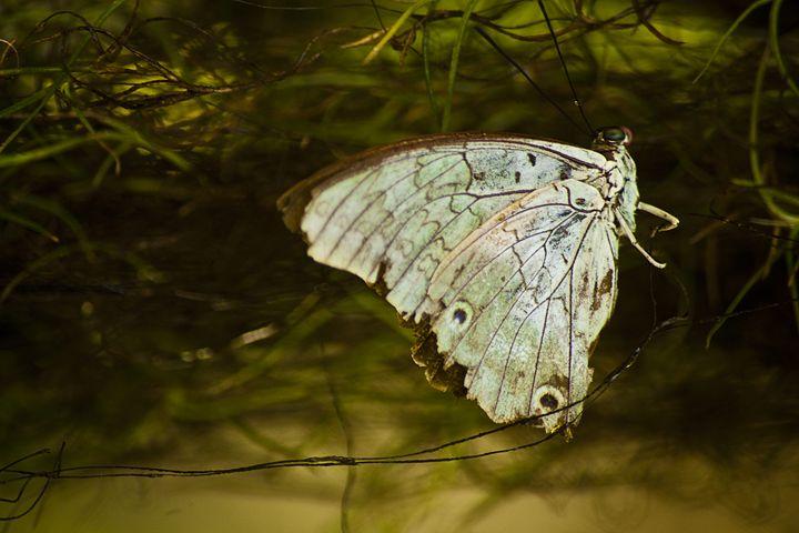 Moth in a Tree - ArtByLaurenBritz