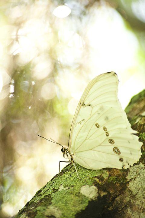Butterfly in a Tree - ArtByLaurenBritz