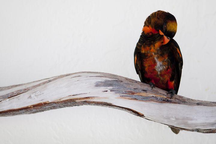Parrot on a Branch - ArtByLaurenBritz