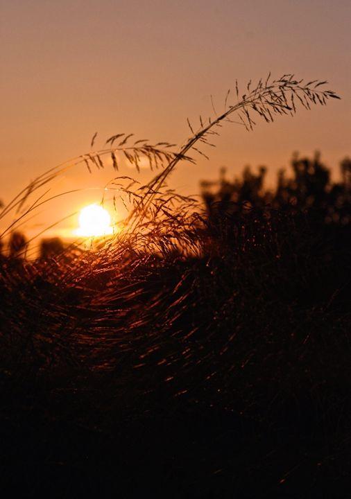 Sunset web - Madelyn Grace
