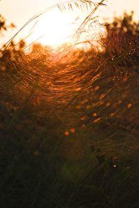 Grass web