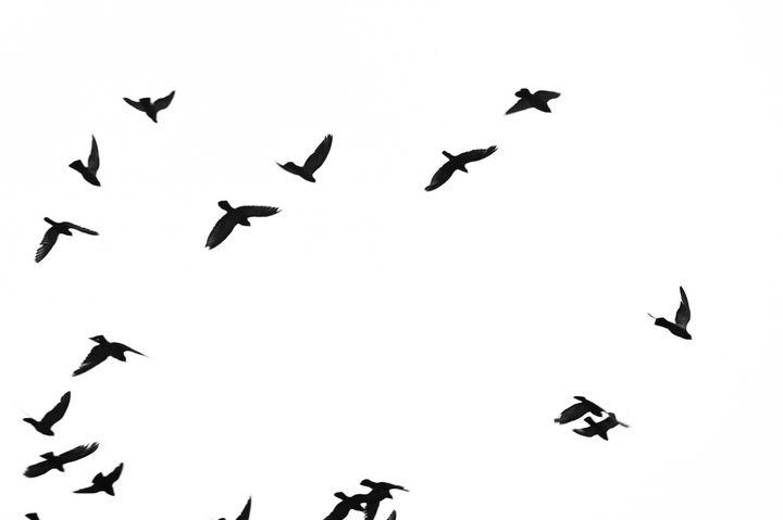 Birds on Sky - Jerome Paulos
