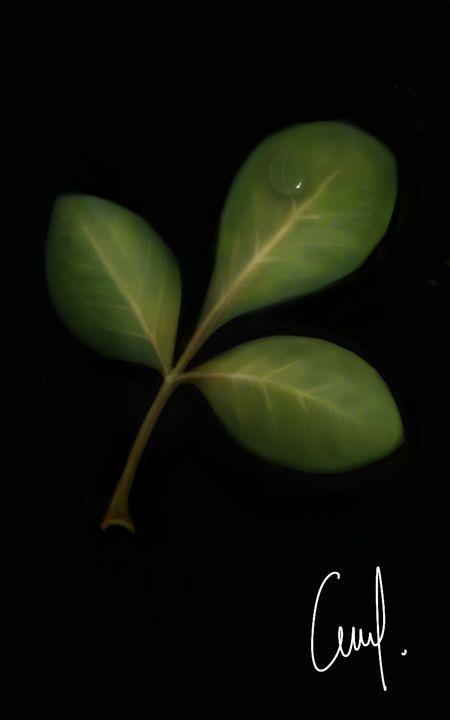 Leaf - Phi k