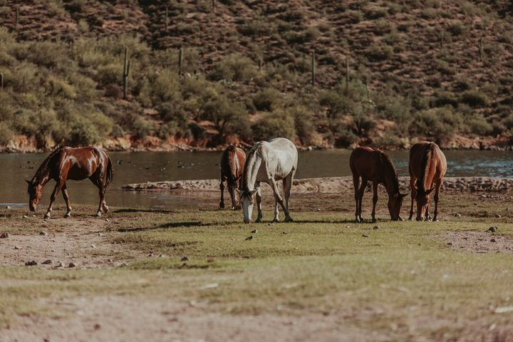 Wild Horses at the River - Anita McLeod Photography
