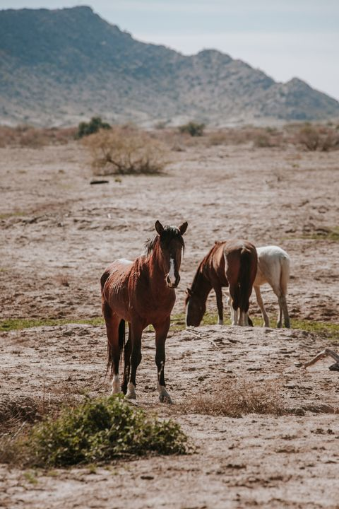 Wild Mustangs in Gila River - Anita McLeod Photography