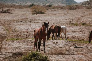 Gila River WIld Mustang