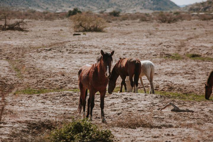 Gila River WIld Mustang - Anita McLeod Photography