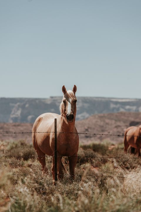 Wild Mustang Page Arizona - Anita McLeod Photography